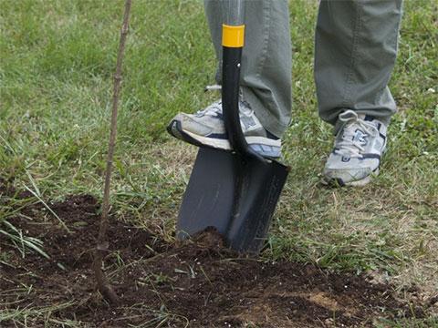 digging-task